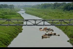 Dibongkar, puluhan kios PKL di bantaran Sungai BKT