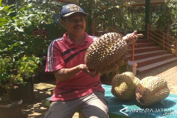 Banyumas Segera Gelar Festival Durian