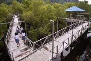 Melalui Wisata Edukasi, Lesarikan Mangrove