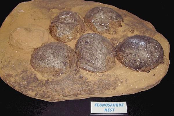 Polisi China Tangkap Pencuri 80 Fosil Telur Dinosaurus