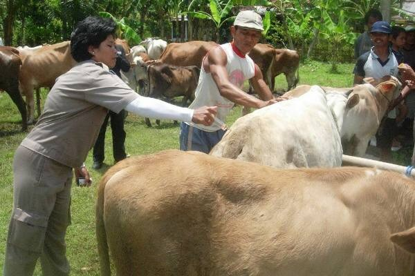 Realisasi Upsus Siwab di Banjarnegara capai target