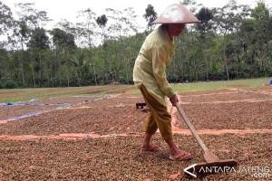 Cuaca mendukung, produksi kopi di Temanggung diprediksi meningkat