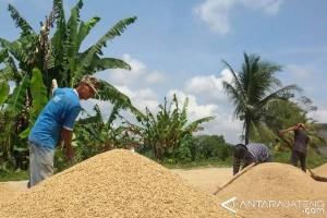 Petani rasakan sejahtera saat harga gabah tinggi