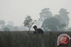 BMKG: Ada 12 Titik Panas di Empat Kabupaten Provinsi Jambi