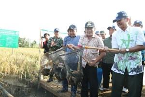 Banjarnegara Dorong Petani Terapkan Minapadi