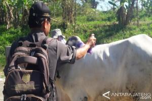 Pemkab Temanggung intensifkan pemeriksaan hewan kurban