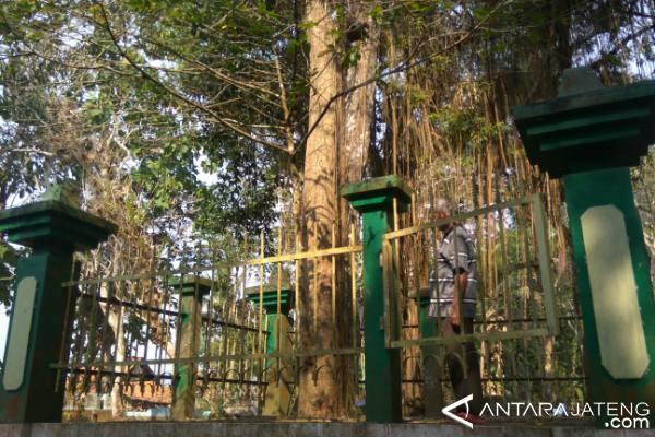 Warga Harapkan Pohon Tembaga Jadi Destinasi Wisata