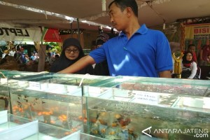 Pemasaran Ikan Hias Kudus Andalkan Medsos