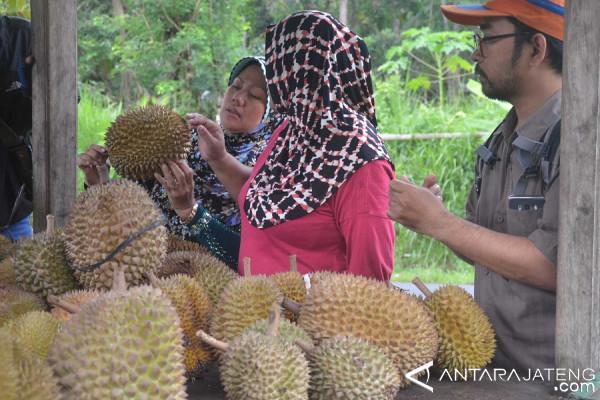 Dusun Gajian Kampung Wisata Durian belum Dikenal Masyarakat