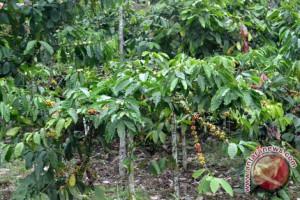 295 Hektare Kawasan Hutan Temanggung Ditanami Kopi