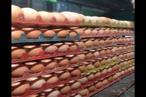 Pasokan Minim, Harga Telur di Temanggung Merangkak Naik