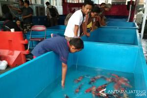 Pemkab Kudus Dukung Desa Wisata Ikan Hias