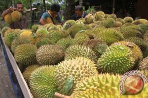 Durian Upin Ipin bentuk kecil buahnya tebal