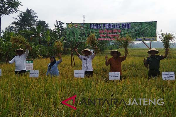 Kementan: jangan terombang-ambing dengan kebijakan impor beras