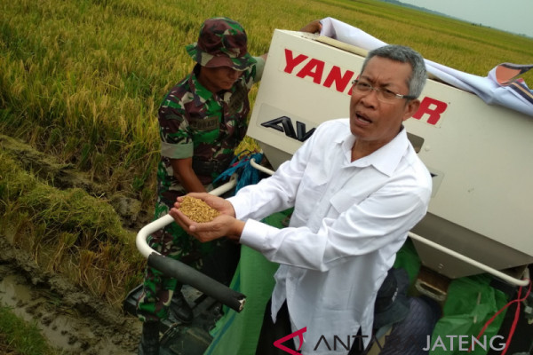 Pola tanam padi Grobogan bisa ditiru daerah lain