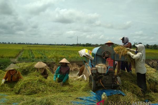 Menahan terbukanya keran impor beras