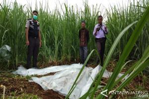 Hilang lima hari, warga Batang ditemukan membusuk di perkebunan