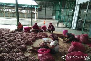 Dongkrak harga, Bulog siap borong bawang merah petani