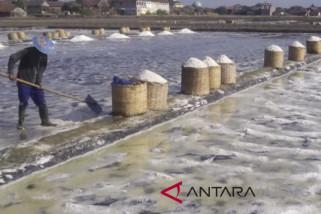 Tampung hasil petambak, legislator usulkan bangun pabrik garam di Jepara