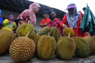 Festival durian Klaten
