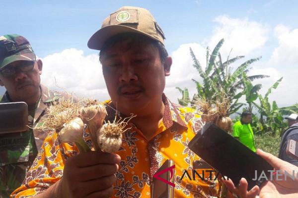 Ihwal bawang putih, Indonesia tertinggal 20 tahun