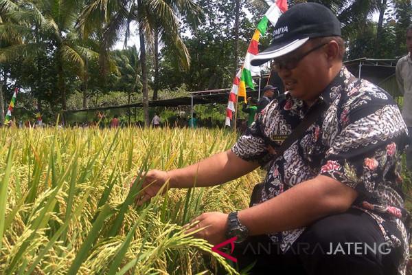 Semangat seorang tenaga penyuluh dalam mendampingi petani