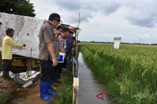 Pekalongan uji coba mina padi 28 hektare