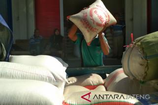 Musim panen usai, harga beras di Kudus mulai naik