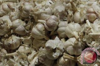 Petani bawang putih Temanggung simpan hasil panen
