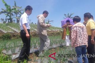 Potensi lahan pengembangan bawang putih 600.000 hektare