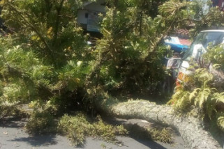 Dua remaja tewas tertimpa pohon tumbang