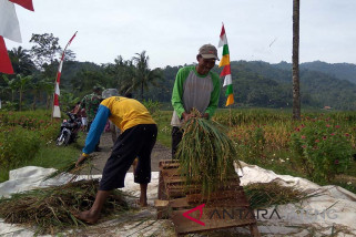 Antisipasi anjloknya harga, semua pihak diminta dukung serap gabah petani