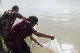 310.000 benih ikan ditebar di Sungai Serayu
