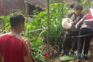 Warga Temanggung temukan mayat bayi di kebun