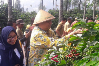 Menteri Perindustrian panen kopi di lereng Gunung Sindoro