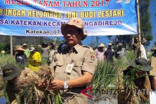 Petani lereng Gunung Sindoro panen bawang putih