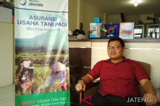 8.029,25 ha tanaman padi di Keresidenan Pati diasuransikan