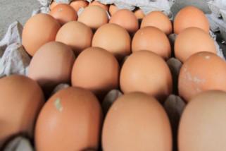 Peneliti: Sebutir telur per hari turunkan risiko penyakit jantung