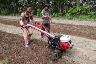 Mahasiswa STPP Magelang dampingi Kelompok Tani Jlumpang