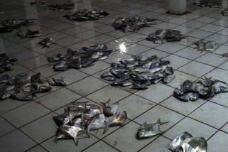 Nelayan Cilacap panen ikan bawal