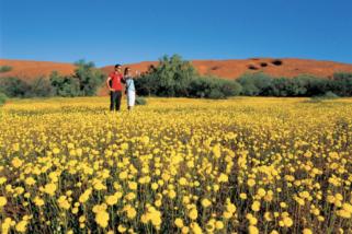 Australia Barat rumah rangkaian bunga liar terbesar di dunia