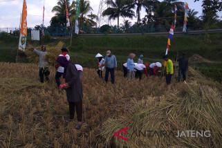 Tingkatkan ketahanan pangan, petani tanam padi, jagung, dan kedelai