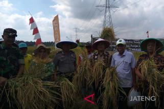 Cilacap siap kembangkan padi Sembada