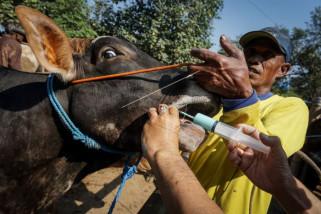 Pastikan bebas penyakit, pemeriksaan hewan kurban penting dilakukan