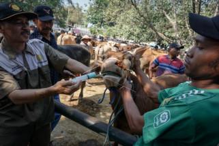 MUI sosialisasikan pentingnya pemeriksaan hewan kurban agar penuhi persyaratan
