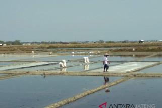 Cuaca panas, petani mulai produksi garam