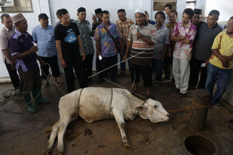 Pelatiham tata cara penyembelihan hewan kurban