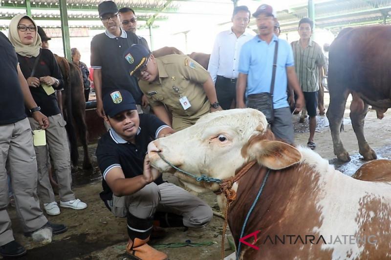 Ditemukan sapi tak sehat di Kudus jelang  Idul Adha