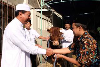 Mahasiswa STPP Magelang ikut periksa hewan kurban