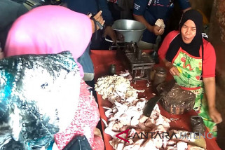 Sempat turun, harga daging ayam di Purwokerto kembali naik